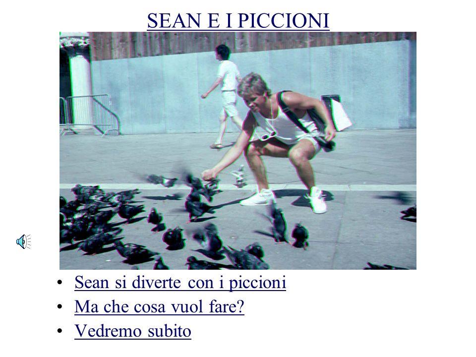 UN VOLO DI PICCIONI A VENEZIA Attenti ai piccioni! Non voglio fare uno scontro con un piccione! Quanti piccioni ci sono a Venezia? – milioni!