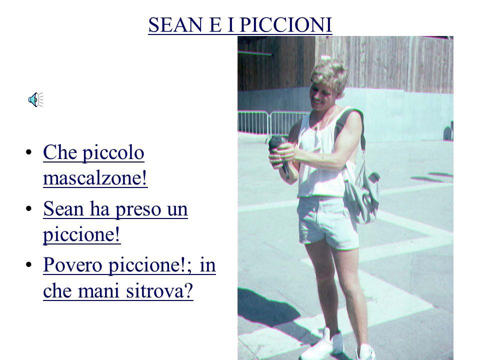 SEAN E I PICCIONI Sean si diverte con i piccioni Ma che cosa vuol fare? Vedremo subito