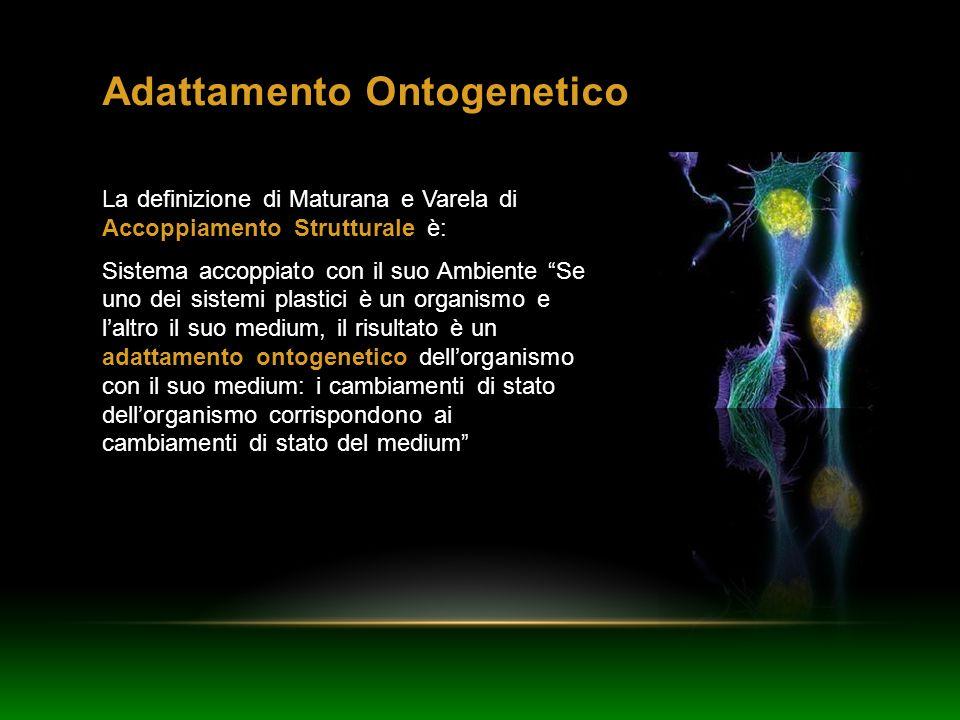 Adattamento Ontogenetico La definizione di Maturana e Varela di Accoppiamento Strutturale è: Sistema accoppiato con il suo Ambiente Se uno dei sistemi