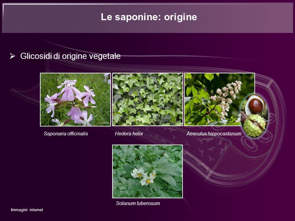 Glicosidi di origine vegetale Le saponine: origine Saponaria officinalis Hedera helix Aesculus hippocastanum Solanum tuberosum Immagini: internet