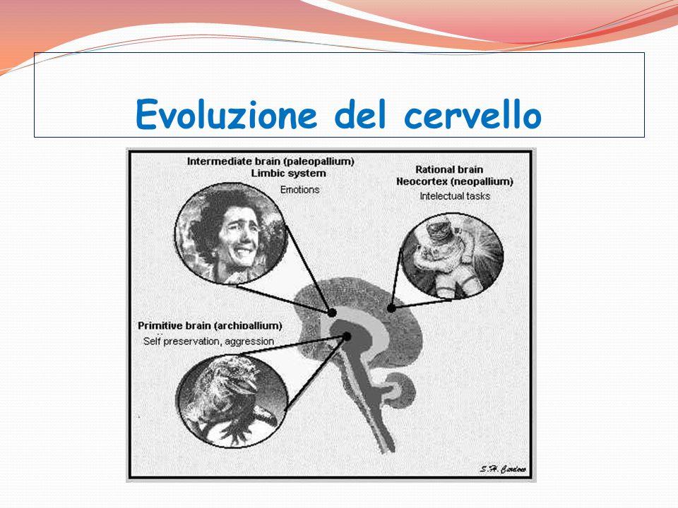 Evoluzione del cervello