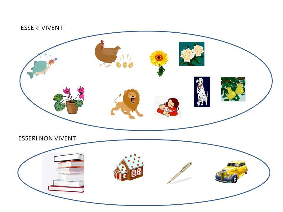 Conosciuto Gli Esseri Viventi /Non Viventi - Lessons - Tes Teach YN46