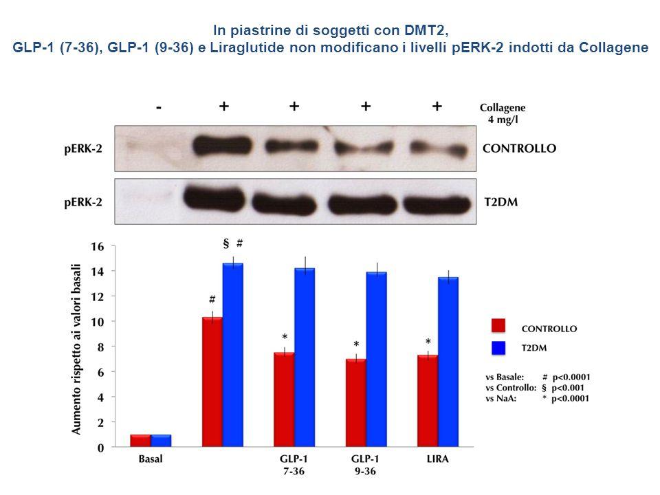 In piastrine di soggetti con DMT2, GLP-1 (7-36), GLP-1 (9-36) e Liraglutide non modificano i livelli pERK-2 indotti da Collagene