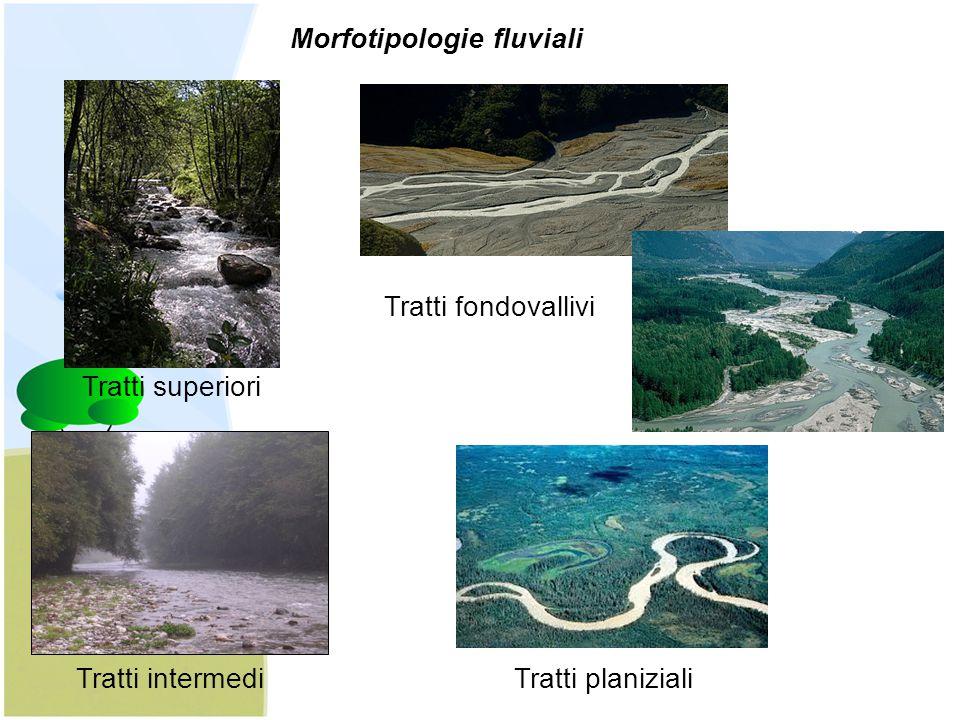 Tratti superiori Tratti intermedi Tratti fondovallivi Tratti planiziali Morfotipologie fluviali