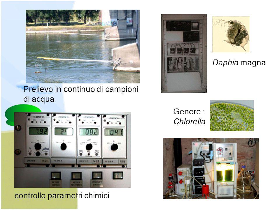 Prelievo in continuo di campioni di acqua controllo parametri chimici Daphia magna Genere : Chlorella