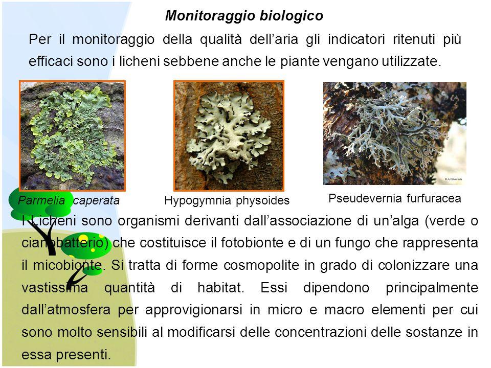 Monitoraggio biologico Per il monitoraggio della qualità dell'aria gli indicatori ritenuti più efficaci sono i licheni sebbene anche le piante vengano
