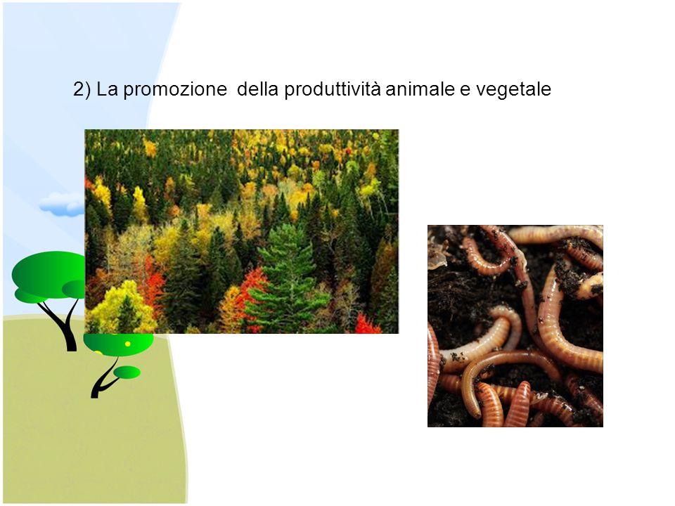 2) La promozione della produttività animale e vegetale
