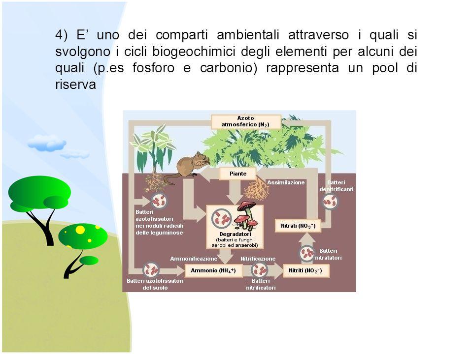 4) E' uno dei comparti ambientali attraverso i quali si svolgono i cicli biogeochimici degli elementi per alcuni dei quali (p.es fosforo e carbonio) r