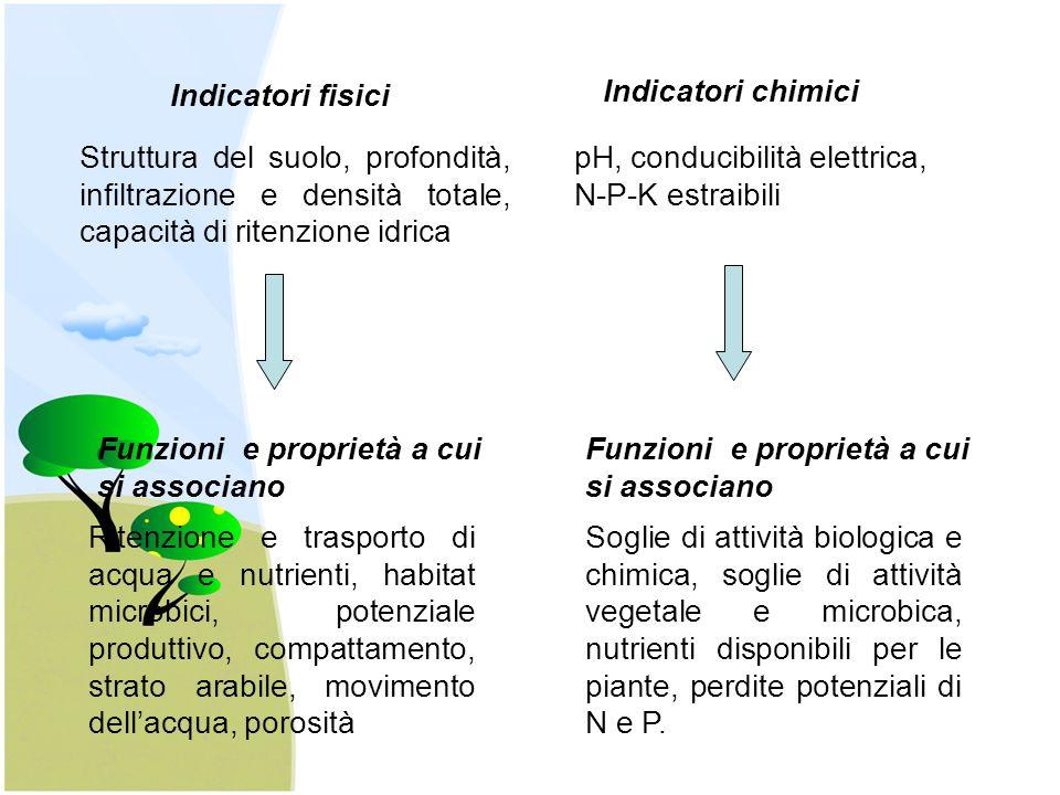 Indicatori fisici Struttura del suolo, profondità, infiltrazione e densità totale, capacità di ritenzione idrica Funzioni e proprietà a cui si associa