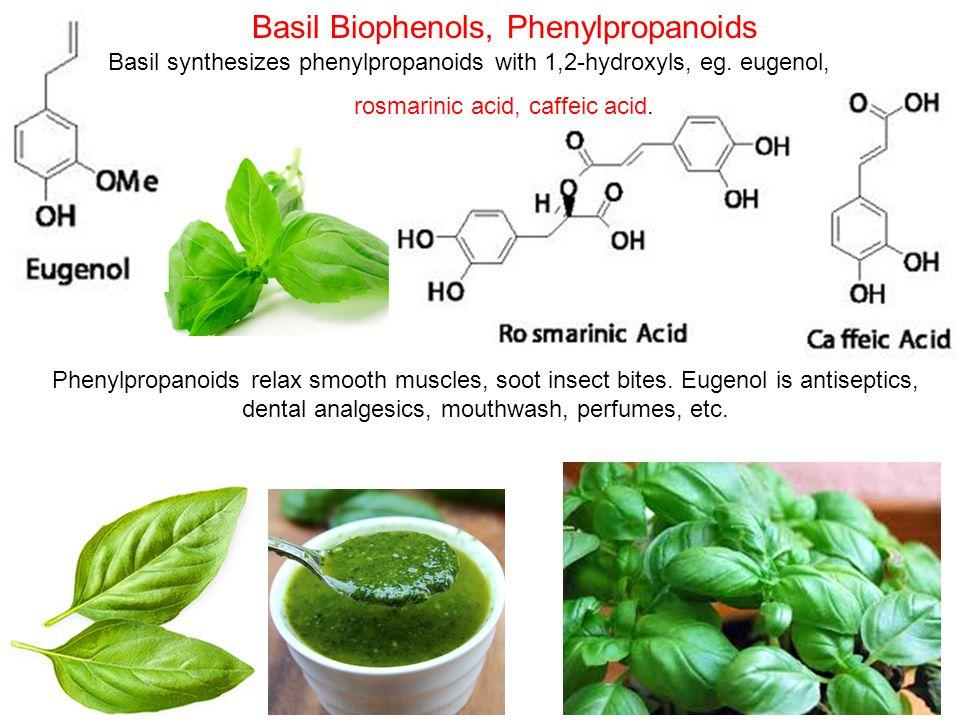 Basil Biophenols, Phenylpropanoids Basil synthesizes phenylpropanoids with 1,2-hydroxyls, eg.