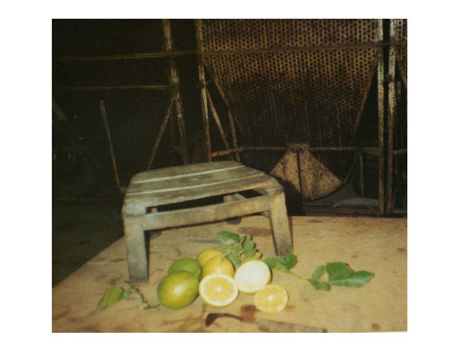 Il verdello La coltura del limone nella Riviera Ionica iniziò alla prima metà dell 800 e soppiantò quella della vite.Fino al 1928-29,a S.Teresa,la produzione del limone arrivò al massimo (18.800 t.