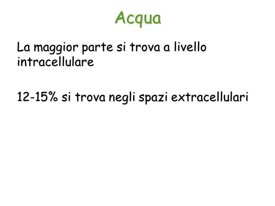 Acqua La maggior parte si trova a livello intracellulare 12-15% si trova negli spazi extracellulari