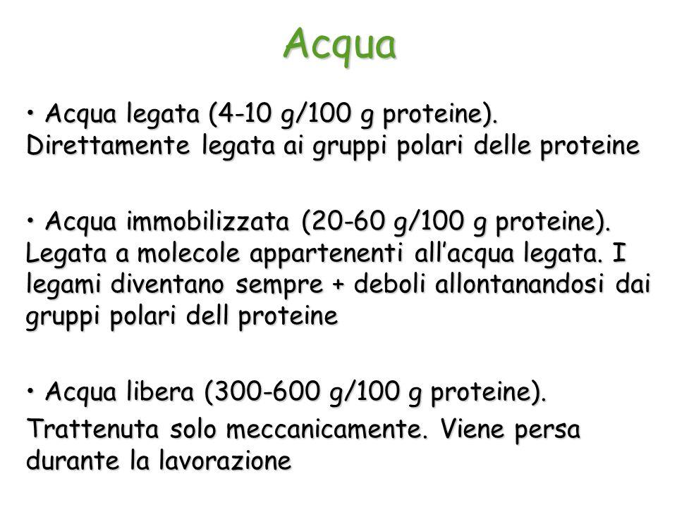 Acqua Acqua legata (4-10 g/100 g proteine). Direttamente legata ai gruppi polari delle proteine Acqua legata (4-10 g/100 g proteine). Direttamente leg