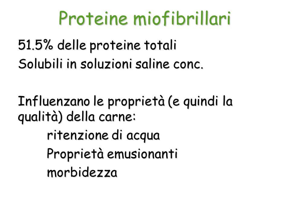 Proteine miofibrillari 51.5% delle proteine totali Solubili in soluzioni saline conc. Influenzano le proprietà (e quindi la qualità) della carne: rite