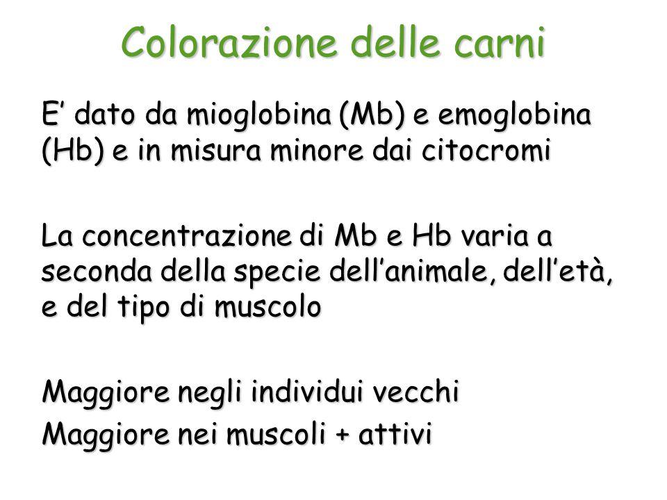 Colorazione delle carni E' dato da mioglobina (Mb) e emoglobina (Hb) e in misura minore dai citocromi La concentrazione di Mb e Hb varia a seconda del
