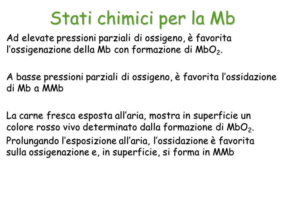 Stati chimici per la Mb Ad elevate pressioni parziali di ossigeno, è favorita l'ossigenazione della Mb con formazione di MbO 2. A basse pressioni parz
