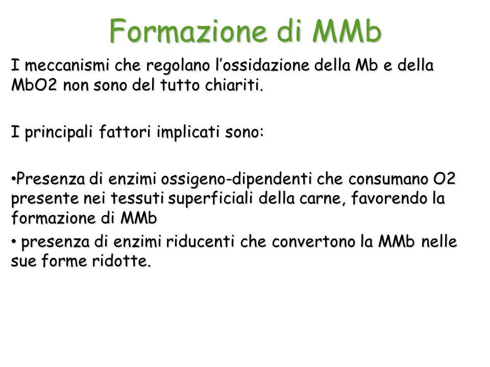 Formazione di MMb I meccanismi che regolano l'ossidazione della Mb e della MbO2 non sono del tutto chiariti. I principali fattori implicati sono: Pres