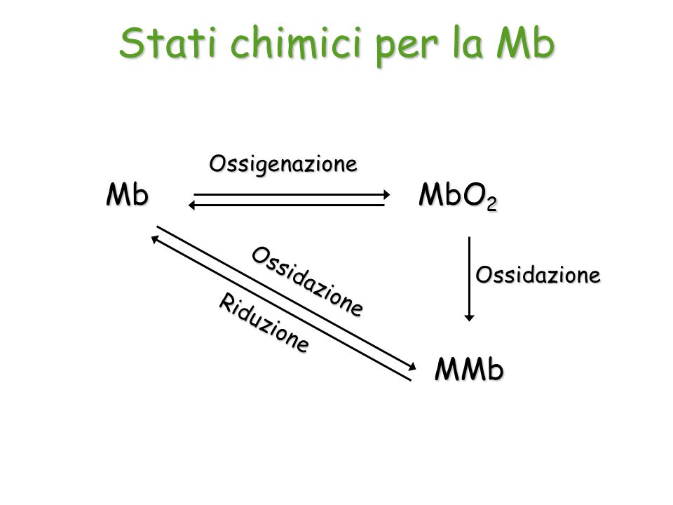 Mb MbO 2 Ossigenazione MMb Ossidazione Riduzione Ossidazione Stati chimici per la Mb