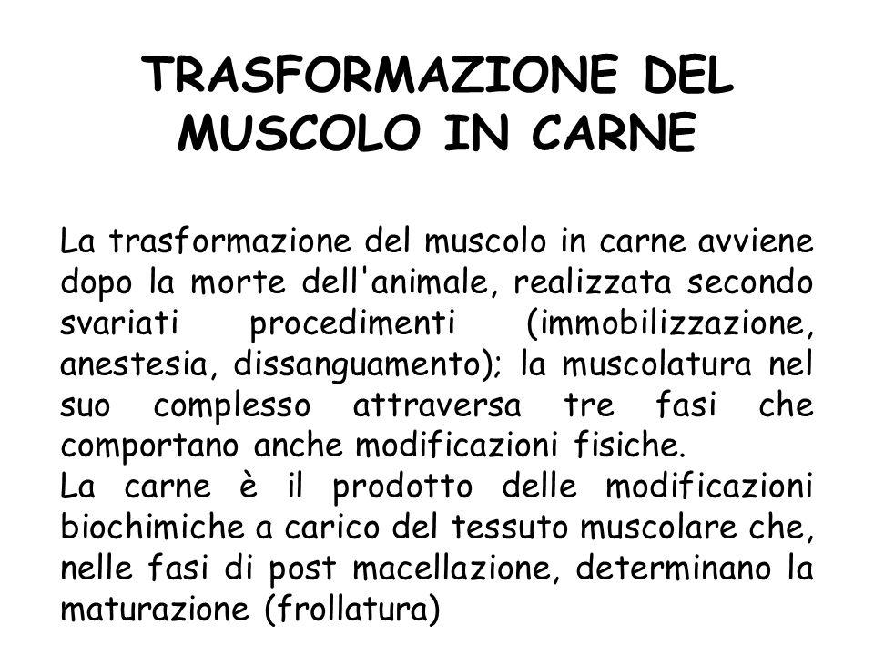 TRASFORMAZIONE DEL MUSCOLO IN CARNE La trasformazione del muscolo in carne avviene dopo la morte dell'animale, realizzata secondo svariati procediment