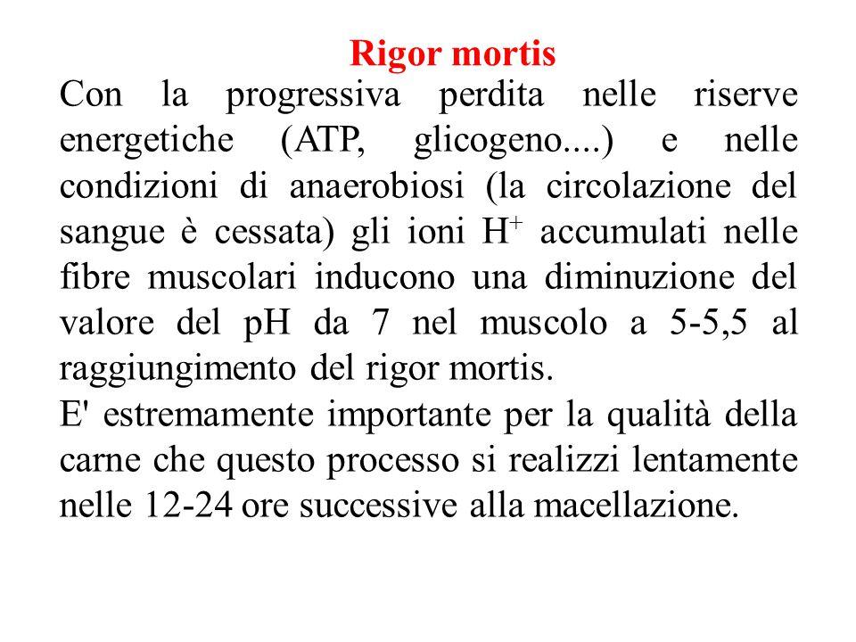 Con la progressiva perdita nelle riserve energetiche (ATP, glicogeno....) e nelle condizioni di anaerobiosi (la circolazione del sangue è cessata) gli