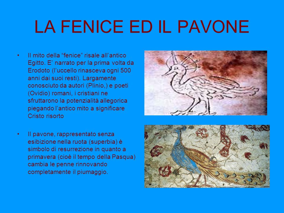 """LA FENICE ED IL PAVONE Il mito della """"fenice"""" risale all'antico Egitto. E' narrato per la prima volta da Erodoto (l'uccello rinasceva ogni 500 anni da"""