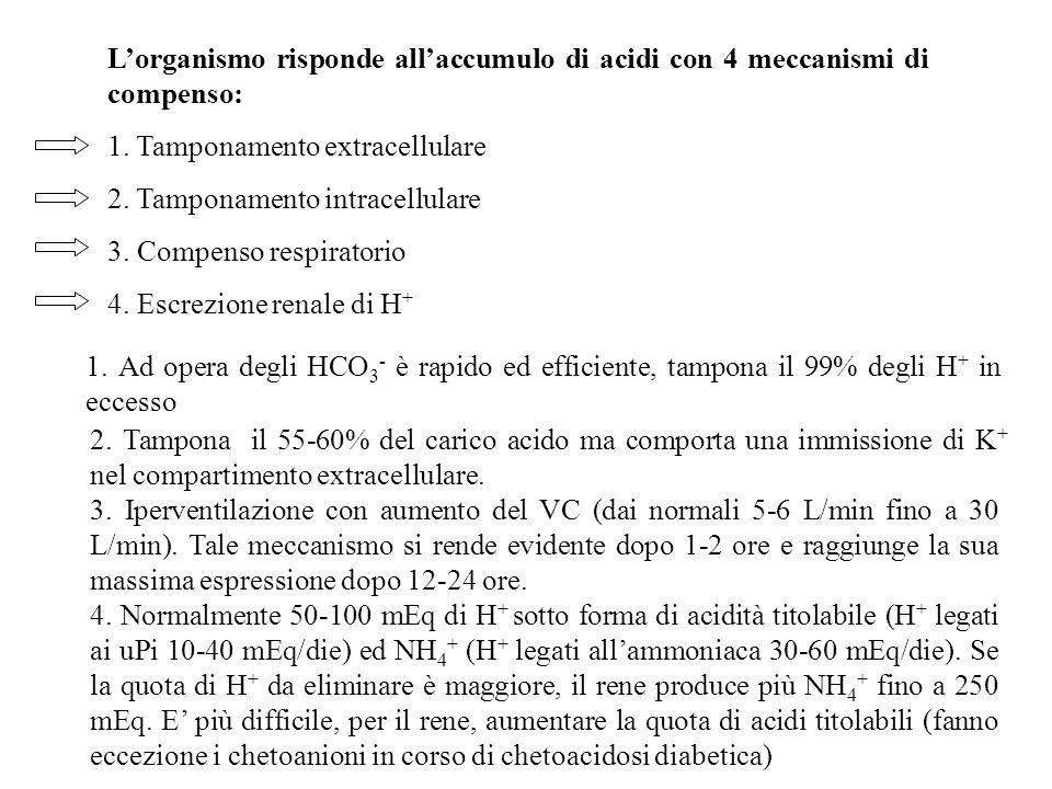 L'organismo risponde all'accumulo di acidi con 4 meccanismi di compenso: 1. Tamponamento extracellulare 2. Tamponamento intracellulare 3. Compenso res