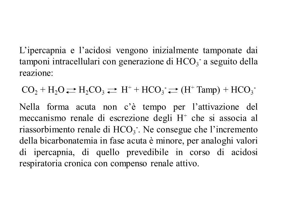 L'ipercapnia e l'acidosi vengono inizialmente tamponate dai tamponi intracellulari con generazione di HCO 3 - a seguito della reazione: CO 2 + H 2 O H