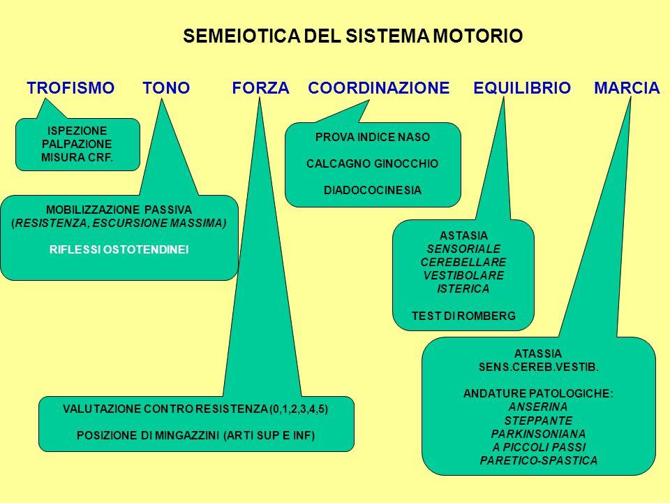   i T T MOTONEURONI CORTICALI MOTONEURONI NEURONI A T (SENSORIALI) NEURONI INIBITORI NEURONI SENSORIALI TALAMICI E CORTICALI 1 RIFLESSI OSTEOTENDINE