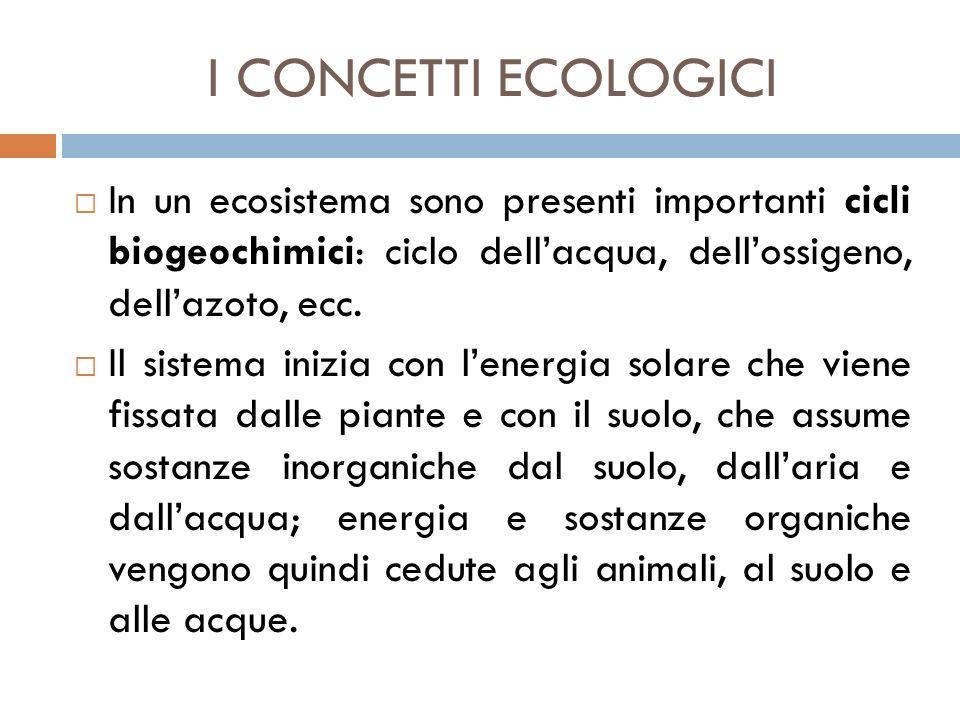 I CONCETTI ECOLOGICI  In un ecosistema sono presenti importanti cicli biogeochimici: ciclo dell'acqua, dell'ossigeno, dell'azoto, ecc.  Il sistema i