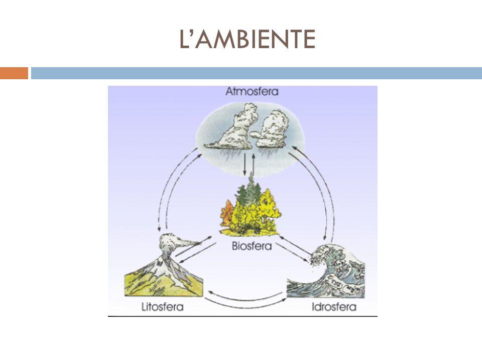 L'APPROCCIO ECOLOGICO  Un nuovo approccio alla questione si mise in luce a partire dalla seconda metà del Novecento, quello ecologico.
