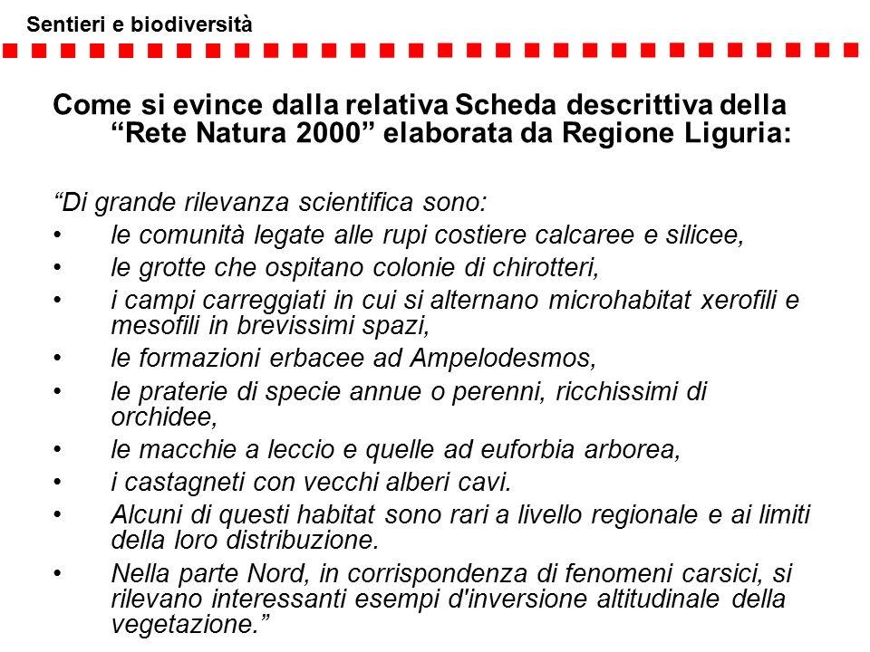 Come si evince dalla relativa Scheda descrittiva della Rete Natura 2000 elaborata da Regione Liguria: Di grande rilevanza scientifica sono: le comunità legate alle rupi costiere calcaree e silicee, le grotte che ospitano colonie di chirotteri, i campi carreggiati in cui si alternano microhabitat xerofili e mesofili in brevissimi spazi, le formazioni erbacee ad Ampelodesmos, le praterie di specie annue o perenni, ricchissimi di orchidee, le macchie a leccio e quelle ad euforbia arborea, i castagneti con vecchi alberi cavi.