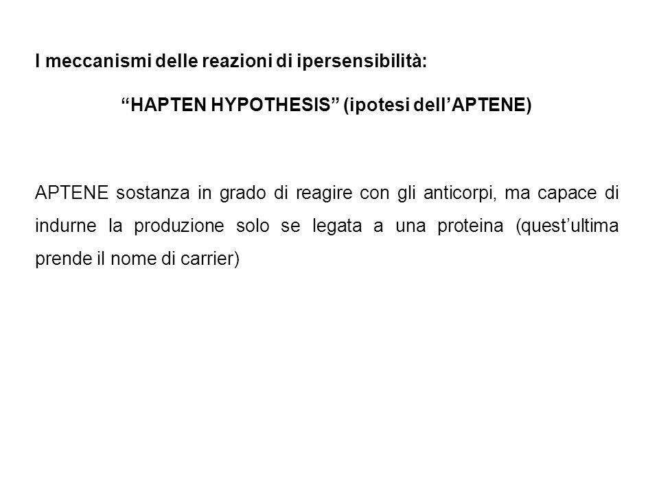 """I meccanismi delle reazioni di ipersensibilità: """"HAPTEN HYPOTHESIS"""" (ipotesi dell'APTENE) APTENE sostanza in grado di reagire con gli anticorpi, ma ca"""