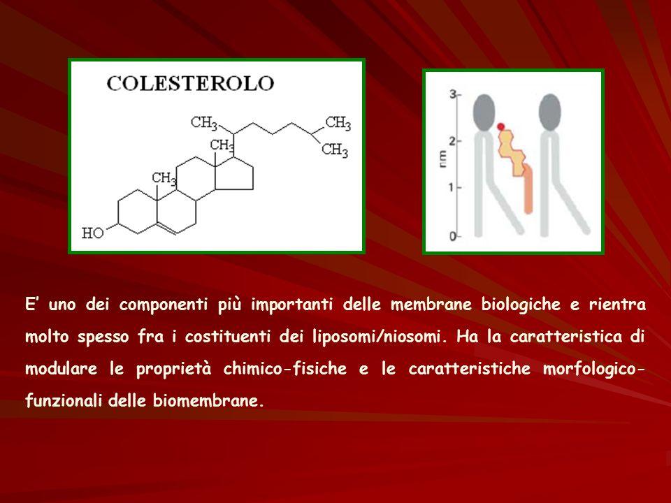 E' uno dei componenti più importanti delle membrane biologiche e rientra molto spesso fra i costituenti dei liposomi/niosomi. Ha la caratteristica di