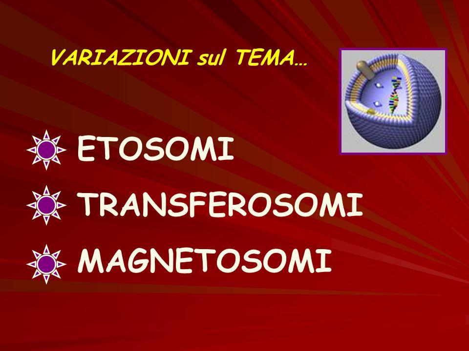 VARIAZIONI sul TEMA… ETOSOMI TRANSFEROSOMI MAGNETOSOMI