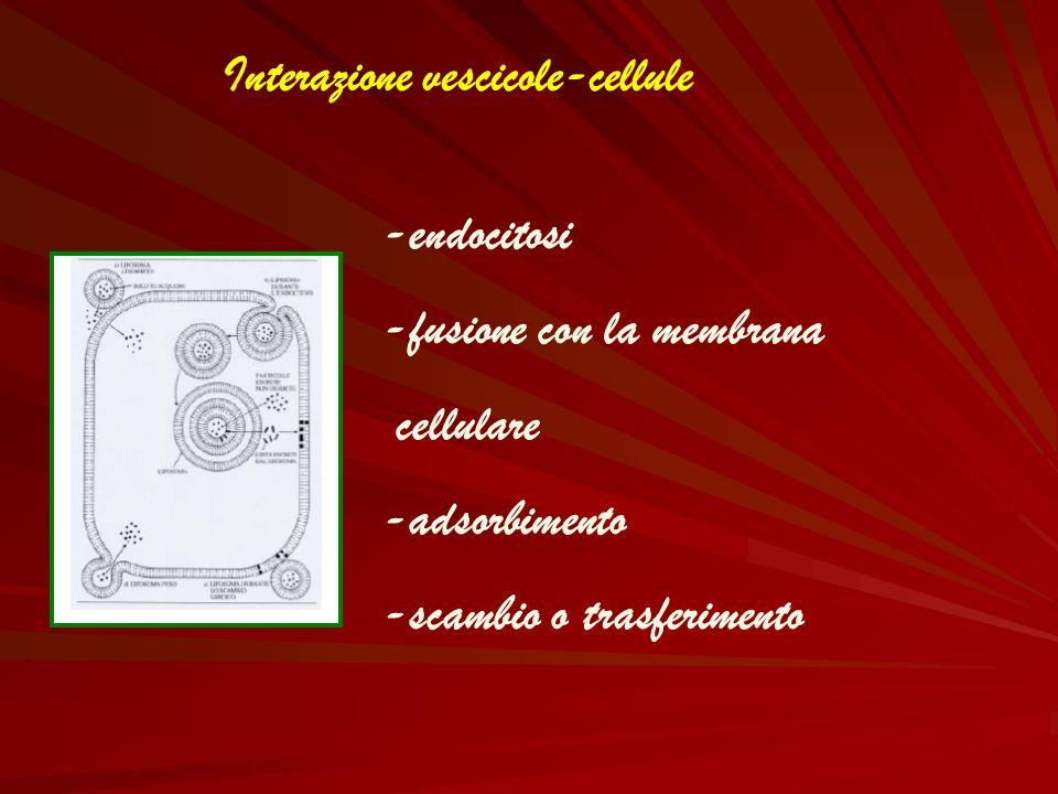 Interazione vescicole-cellule -endocitosi -fusione con la membrana cellulare -adsorbimento -scambio o trasferimento