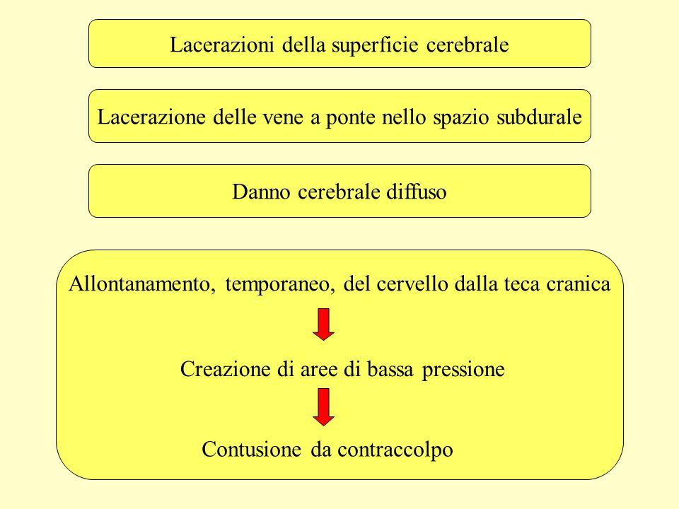 Il centro di gravità del cervello (che è localizzato a livello della regione della ghiandola pineale) si muove in linea retta.