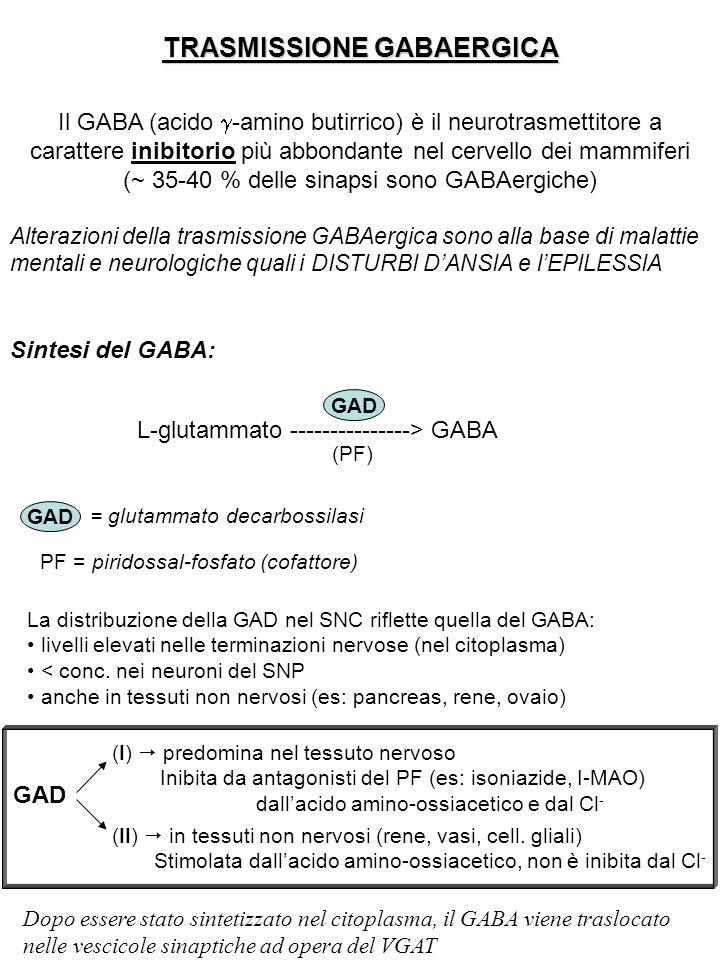 TRASMISSIONE GABAERGICA Il GABA (acido  -amino butirrico) è il neurotrasmettitore a carattere inibitorio più abbondante nel cervello dei mammiferi (~
