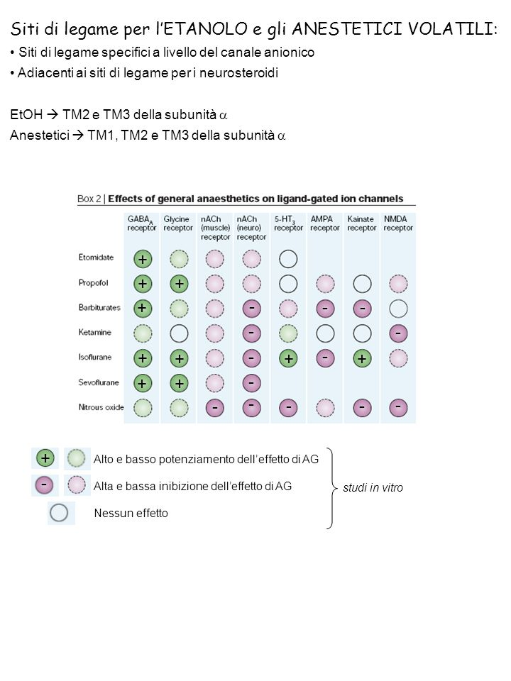Siti di legame per l'ETANOLO e gli ANESTETICI VOLATILI: Siti di legame specifici a livello del canale anionico Adiacenti ai siti di legame per i neuro