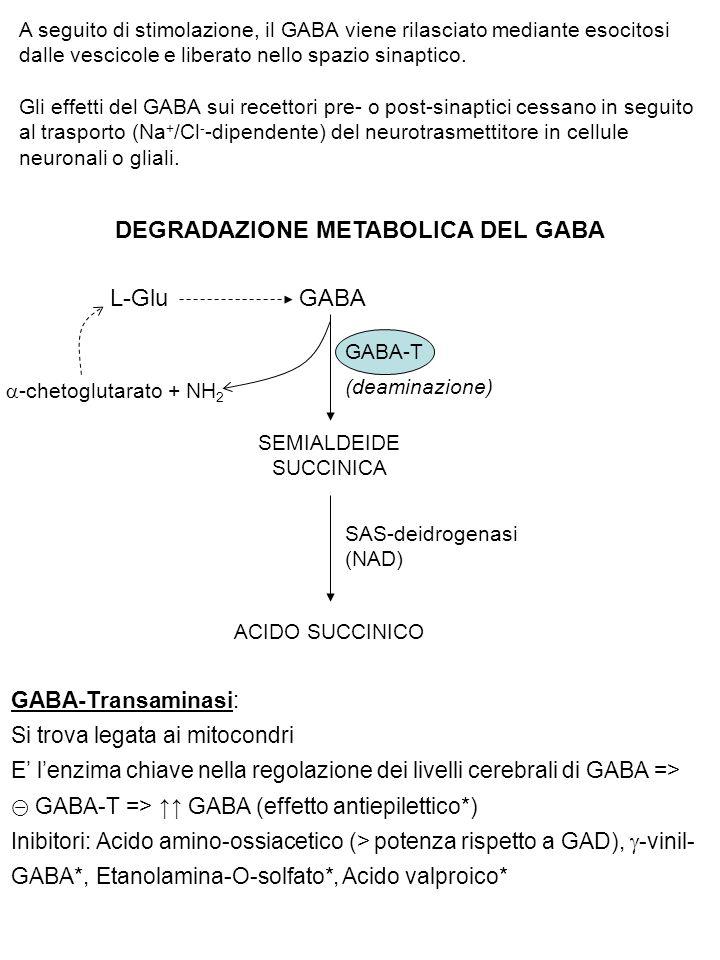 A seguito di stimolazione, il GABA viene rilasciato mediante esocitosi dalle vescicole e liberato nello spazio sinaptico. Gli effetti del GABA sui rec