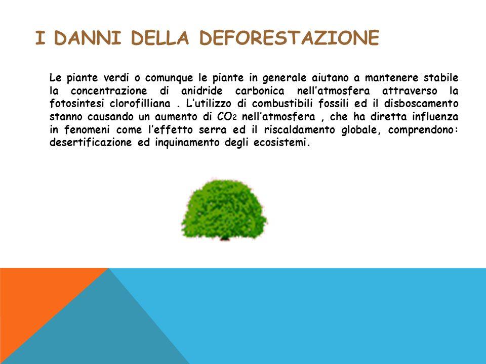 I DANNI DELLA DEFORESTAZIONE Le piante verdi o comunque le piante in generale aiutano a mantenere stabile la concentrazione di anidride carbonica nell