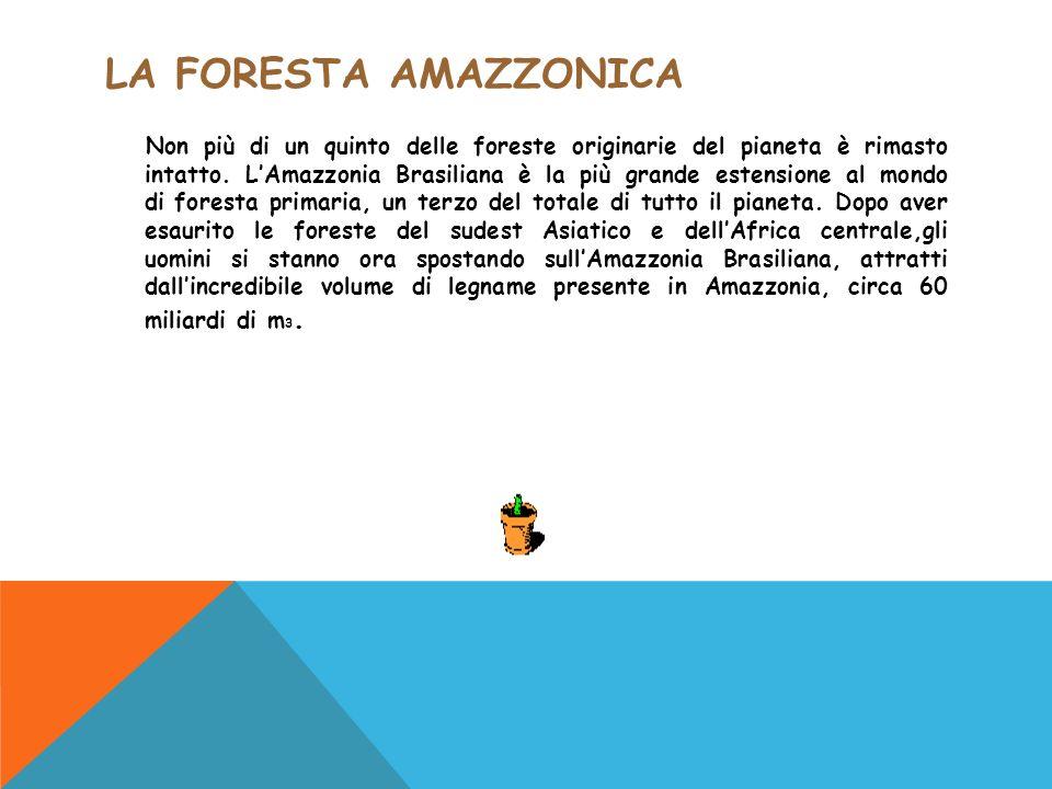 LA FORESTA AMAZZONICA Non più di un quinto delle foreste originarie del pianeta è rimasto intatto. L'Amazzonia Brasiliana è la più grande estensione a