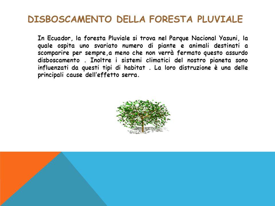 DISBOSCAMENTO DELLA FORESTA PLUVIALE In Ecuador, la foresta Pluviale si trova nel Parque Nacional Yasuni, la quale ospita uno svariato numero di piant