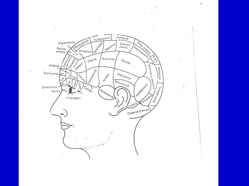 La Neuropsicologia si divide in La Neuropsicologia si divide in: Neuropsicologia Sperimentale: si occupa dello studio del funzionamento cerebrale utilizzando modelli animali Neuropsicologia Cognitiva: si occupa del funzionamento del cervello normale Neuropsicologia Clinica: studia le alterazioni comportamentali causate da processi patologici Riabilitazione Neuropsicologica: sulla base delle conoscenze derivanti dalle altre branche propone trattamenti non farmacologici per i deficit cognitivi e comportamentali causati da lesioni cerebrali