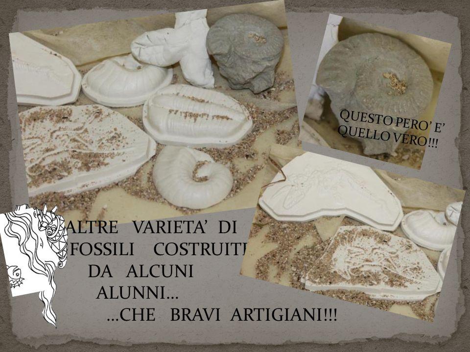 ALTRE VARIETA' DI FOSSILI COSTRUITE DA ALCUNI ALUNNI… …CHE BRAVI ARTIGIANI!!! QUESTO PERO' E' QUELLO VERO!!!