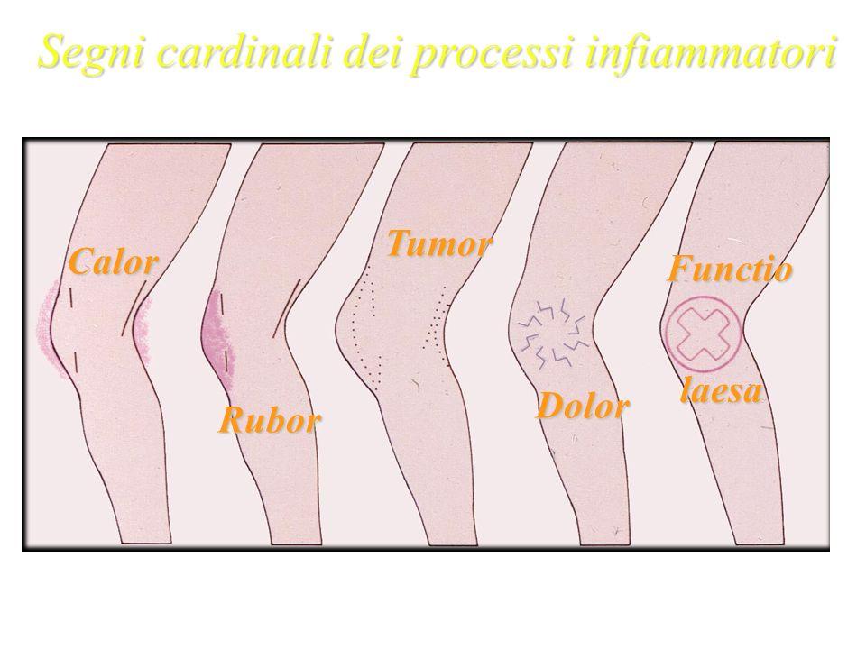 Segni cardinali dei processi infiammatori Galeno 129-201 d.C. Rubor Calor Dolor Tumor Functio laesa