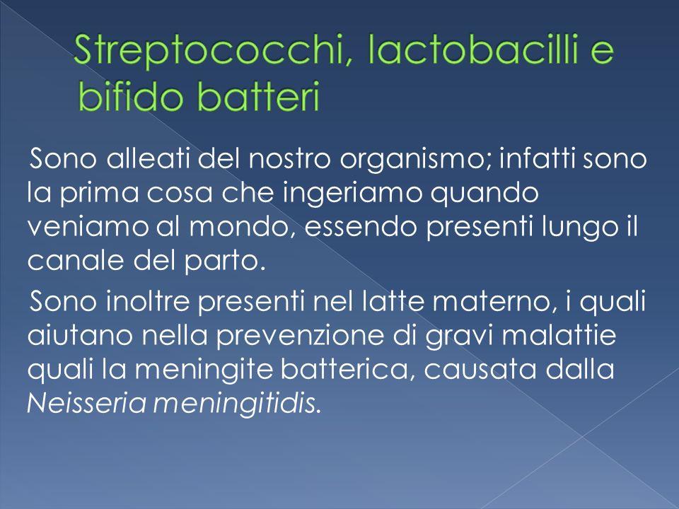 Streptococchi Lactobacilli