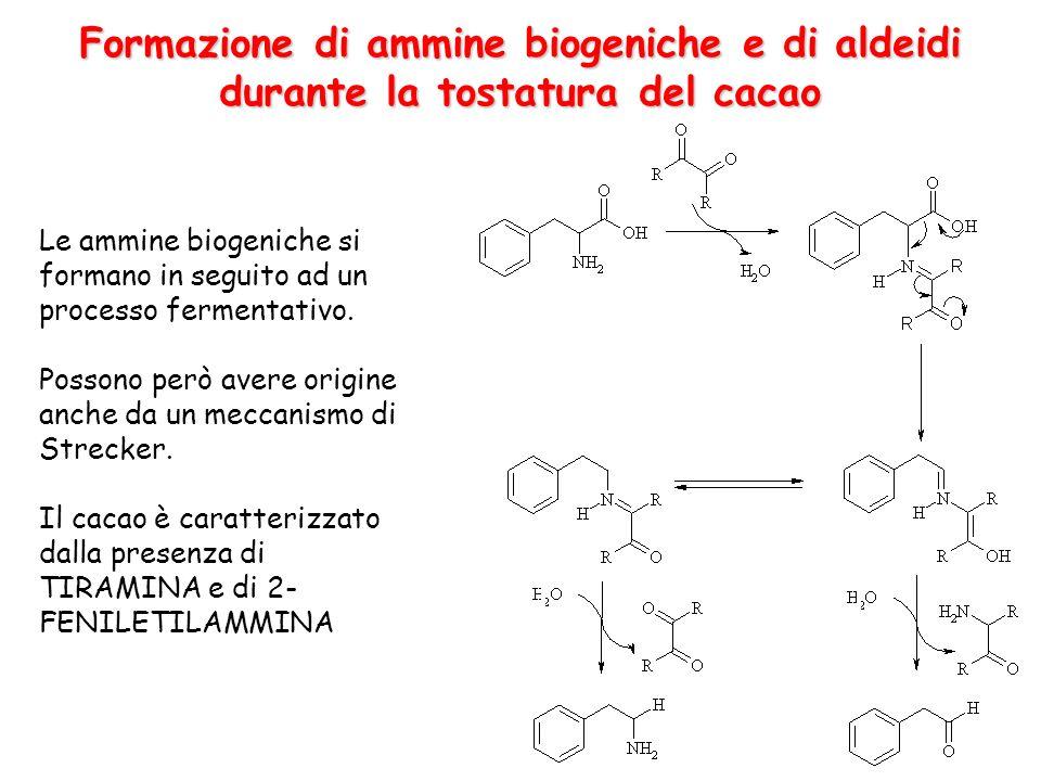 Formazione di ammine biogeniche e di aldeidi durante la tostatura del cacao Le ammine biogeniche si formano in seguito ad un processo fermentativo. Po