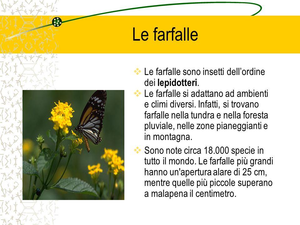 Le farfalle  Le farfalle sono insetti dell'ordine dei lepidotteri.  Le farfalle si adattano ad ambienti e climi diversi. Infatti, si trovano farfall