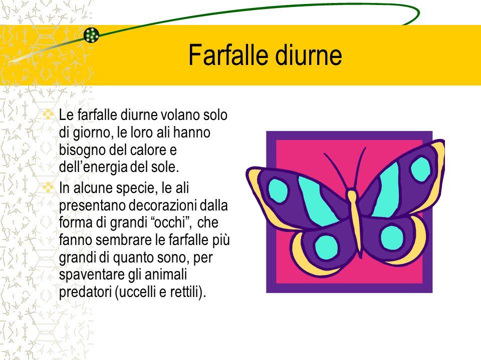 Farfalle diurne  Le farfalle diurne volano solo di giorno, le loro ali hanno bisogno del calore e dell'energia del sole.  In alcune specie, le ali p