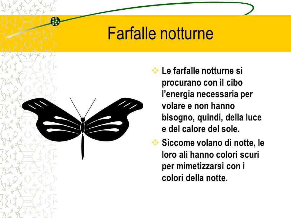 Cosa mangiano le farfalle  Le farfalle (ed anche le api) succhiano il nettare dei fiori con un organo particolare che sembra una piccola tromba allungata (che si chiama proboscide o spiritromba ).